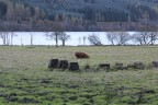 Day Trip to the Scottish Highlands