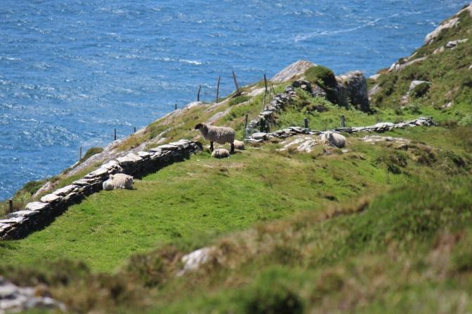 Sheep's Head Way