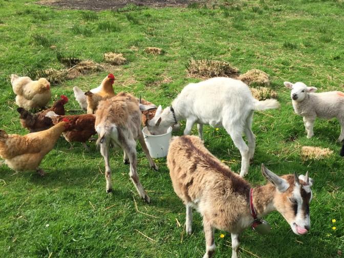 Gael's Lap Farm