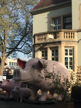 Pig Museum