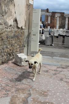 Pompeii dog