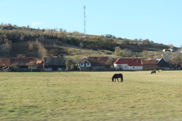 Romanian field
