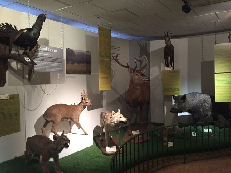 Colmar's Natural History and Ethnography Museum